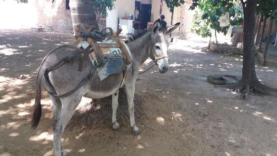 matan burros