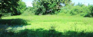 Humedal de María Camila Sur
