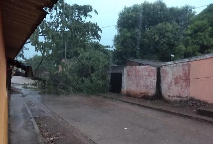 La caída de los árboles causó estragos en el municipio.   FOTO/CORTESÍA.