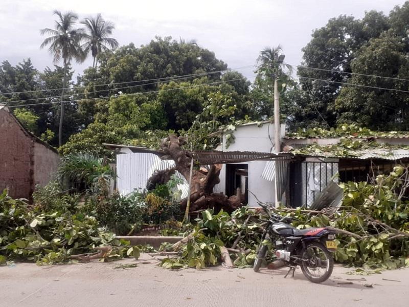 En el corregimiento de Badillo un pesado árbol cayó sobre una vivienda.  FOTO/CORTESÍA.