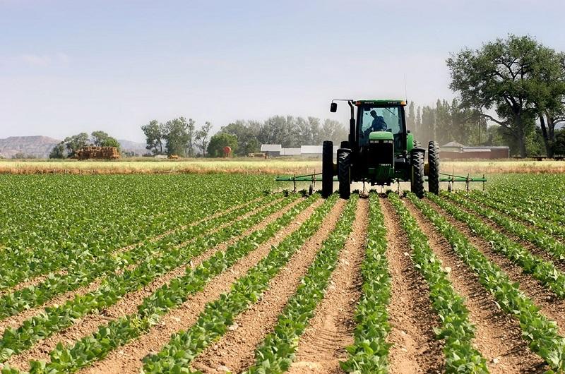 La agricultura está situada en el tercer renglón económico del Cesar, con un porcentaje del PIB de 9.17 %.  FOTO/CORTESÍA.
