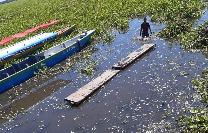 La Tarulla impide la navegabilidad entre Saloa y Chimichagua.   FOTO/CORTESÍA.