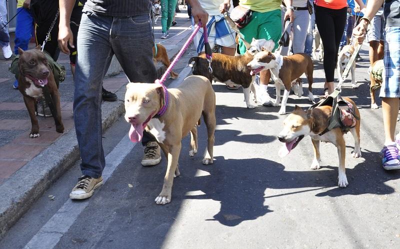 Antes que se diera vía libre a este proyecto, los animalistas en la ciudad salieron en varias oportunidades a marchar en contra del abandono y maltrato hacia los animales.  FOTO/REFERENCIA.