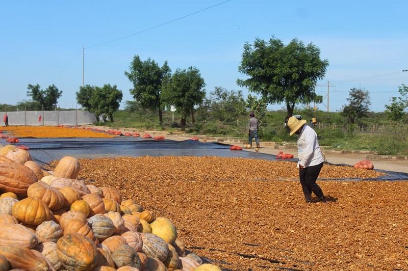 La harina de ahuyama tiene una alta demanda en los países europeos.   Imagen de referencia.