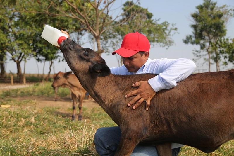 Los ganaderos recibirán herramientas y capacitaciones para aumentar la producción de leche en el Cesar.   FOTO/REFERENCIA.